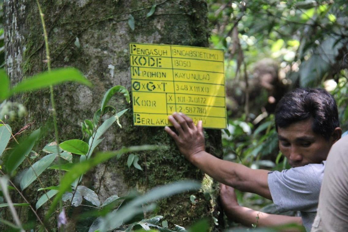 konservasi hutan adopsi pohon