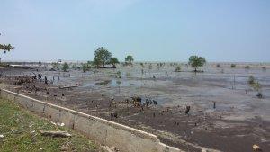 Abrasi pada pesisir pantai Bengkalis, Riau, akibat dari kurangnya penangkal abrasi alami seperti mangrove